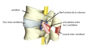 foramen intervertébrale