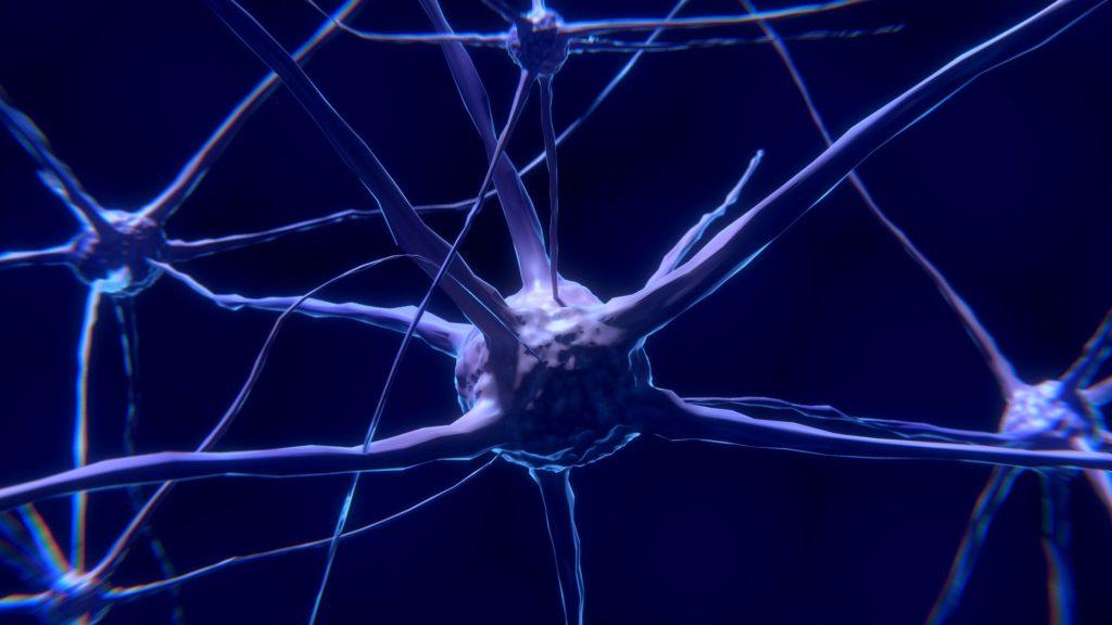 un neurone, les chiropracteurs agissent indirectement sur ce structures