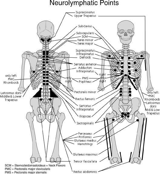 points reflexes kinesiologie et chiropractie