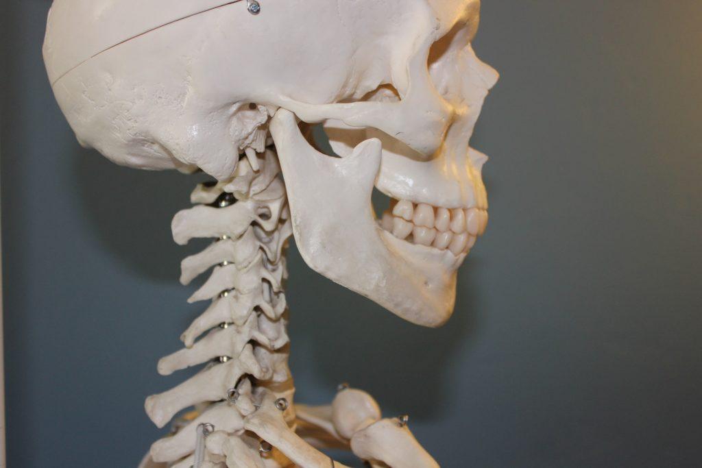 Articulation temporo-mandibulaire en chiropractie