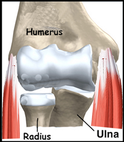 coude et tendons en chiropratie
